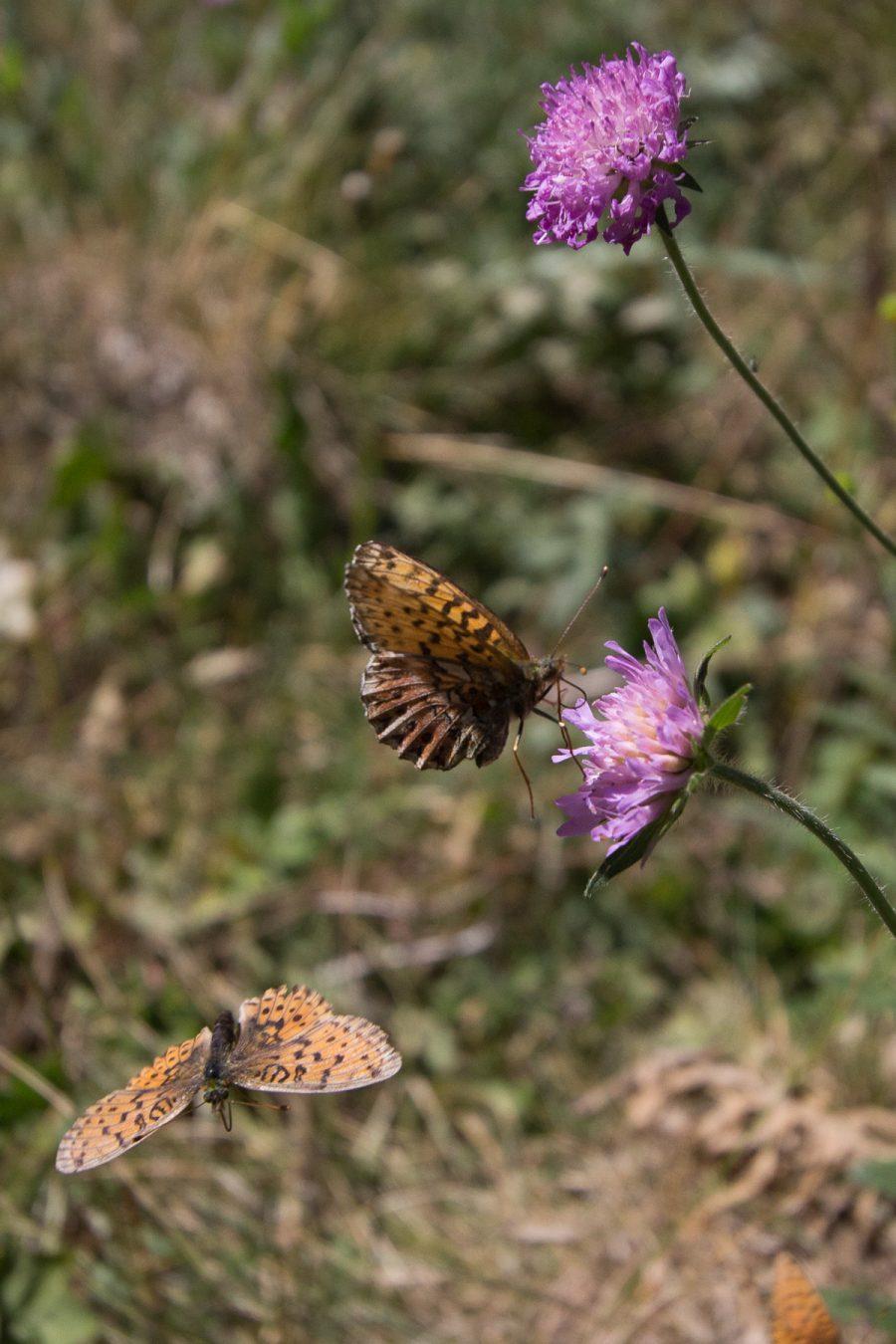 Butterflies, 2016