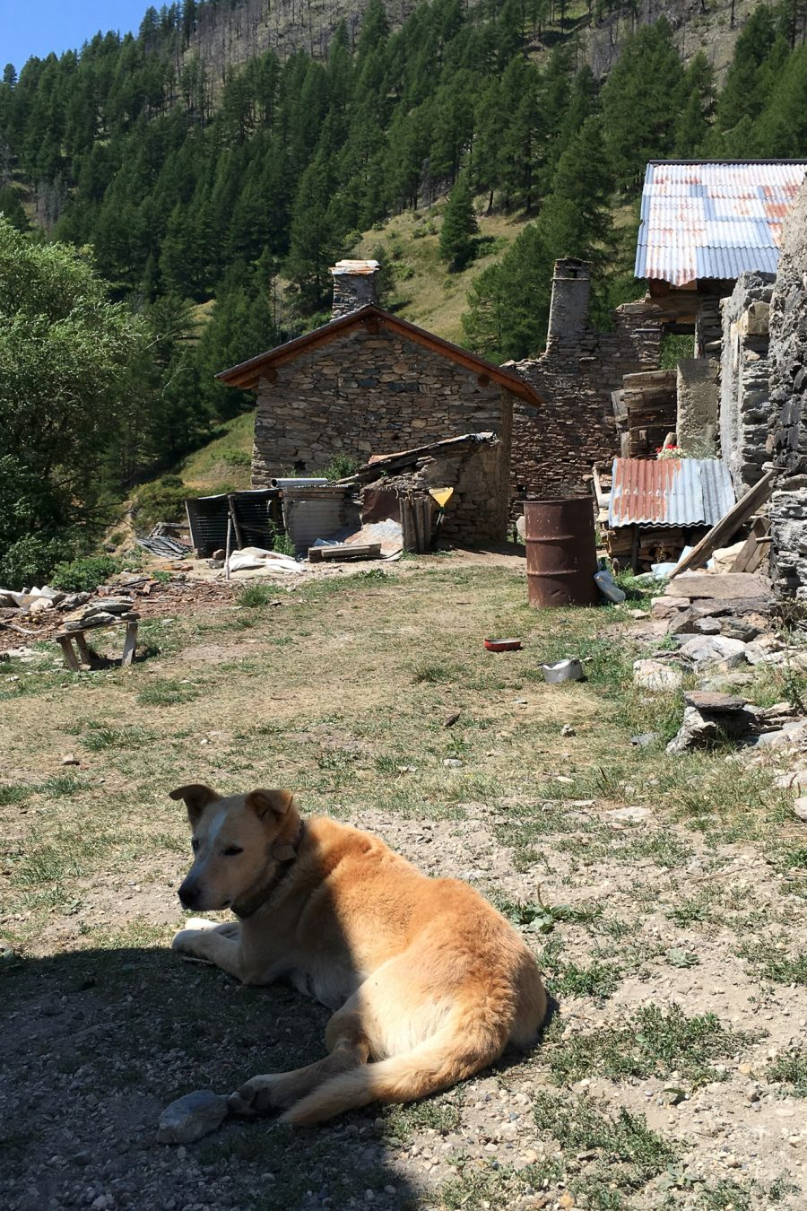 Dog watching in front of the houses of Faussimagna, 2017